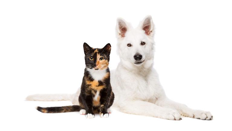 Tierische Weihnachtsmenüs für Hund und Katze