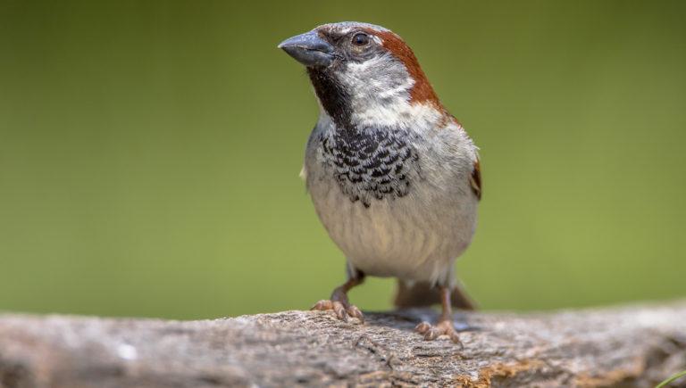 NABU: Mehr Vögel pro Garten gemeldet
